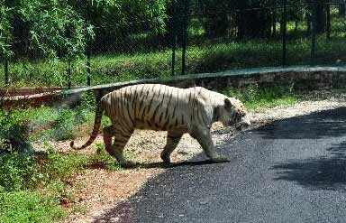 Bannerughatta National Park