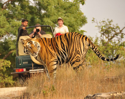 Explore Rural Rajasthan By Horse And Jeep Safaris Tour