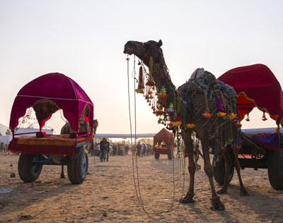 Pushkar Fair Tour with Golden Triangle